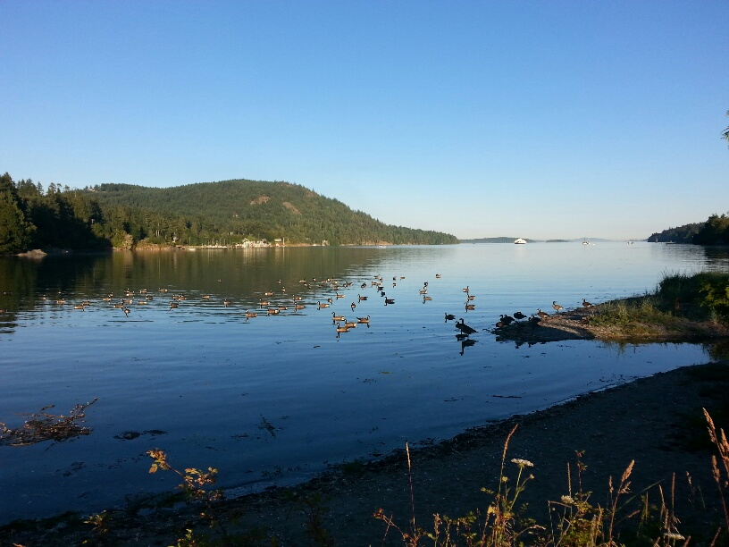 Picture: Fulford Harbour, Saltspring Island, B.C., Canada