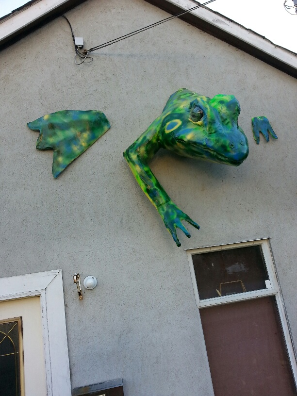Picture:  the new frog emerging from our front wall.