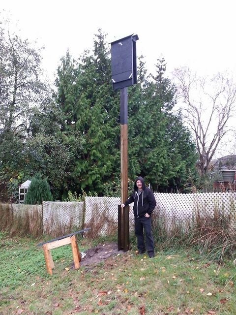 Picture:  The bat house on it's sixteen foot tall post.